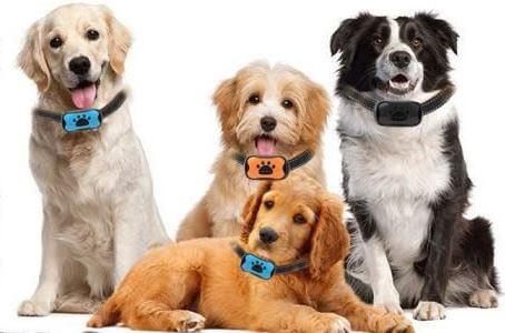 Collier Anti-Aboiement pour chiens