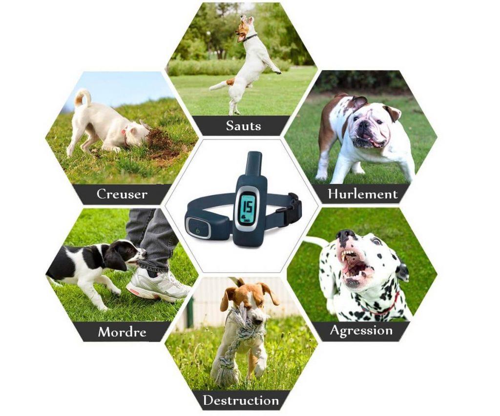 Collier de dressage pour chiens